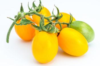 Tomatensorte Japanisches Ei