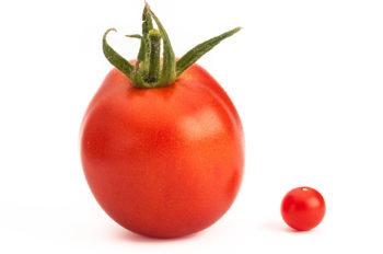 Die kleinste Tomate der Welt - Preiselbeertomate